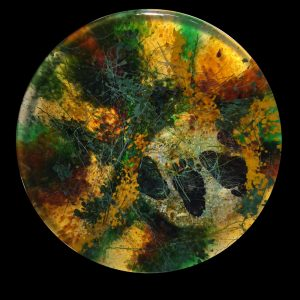 new-inner-circle-black-bear-track-autumn-opal-transparent-coloration-9-2016