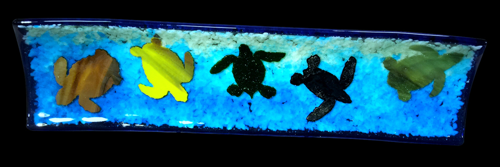 tray-turtle-silhouette-five-species-natural-with-blue-transparent-border-9-2016